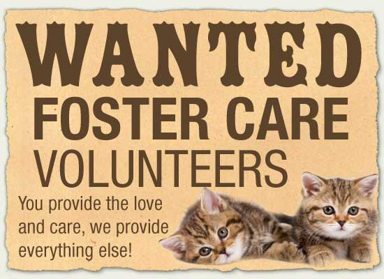 Wanted - Foster Care Volunteers Poster